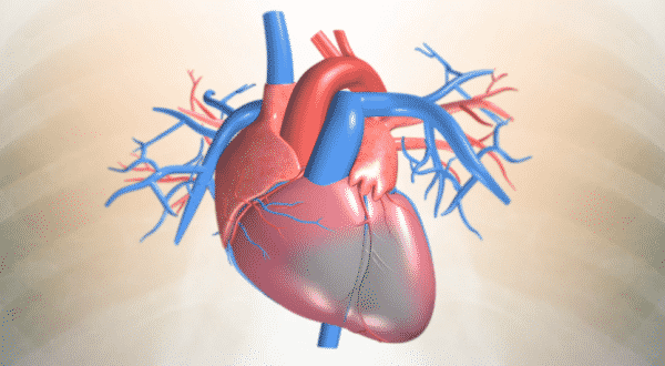 اسباب النوبة القلبية