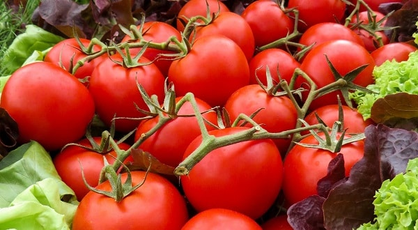 نسبة الكربوهيدرات في الطماطم