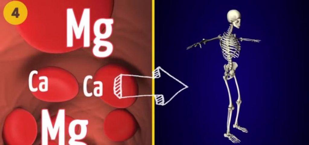 جرعة المغنيسيوم: ماهي الكمية التي يجب تناولها